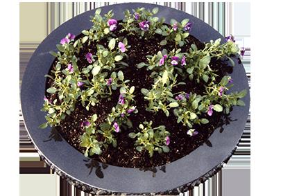 Flower bed HOR1032